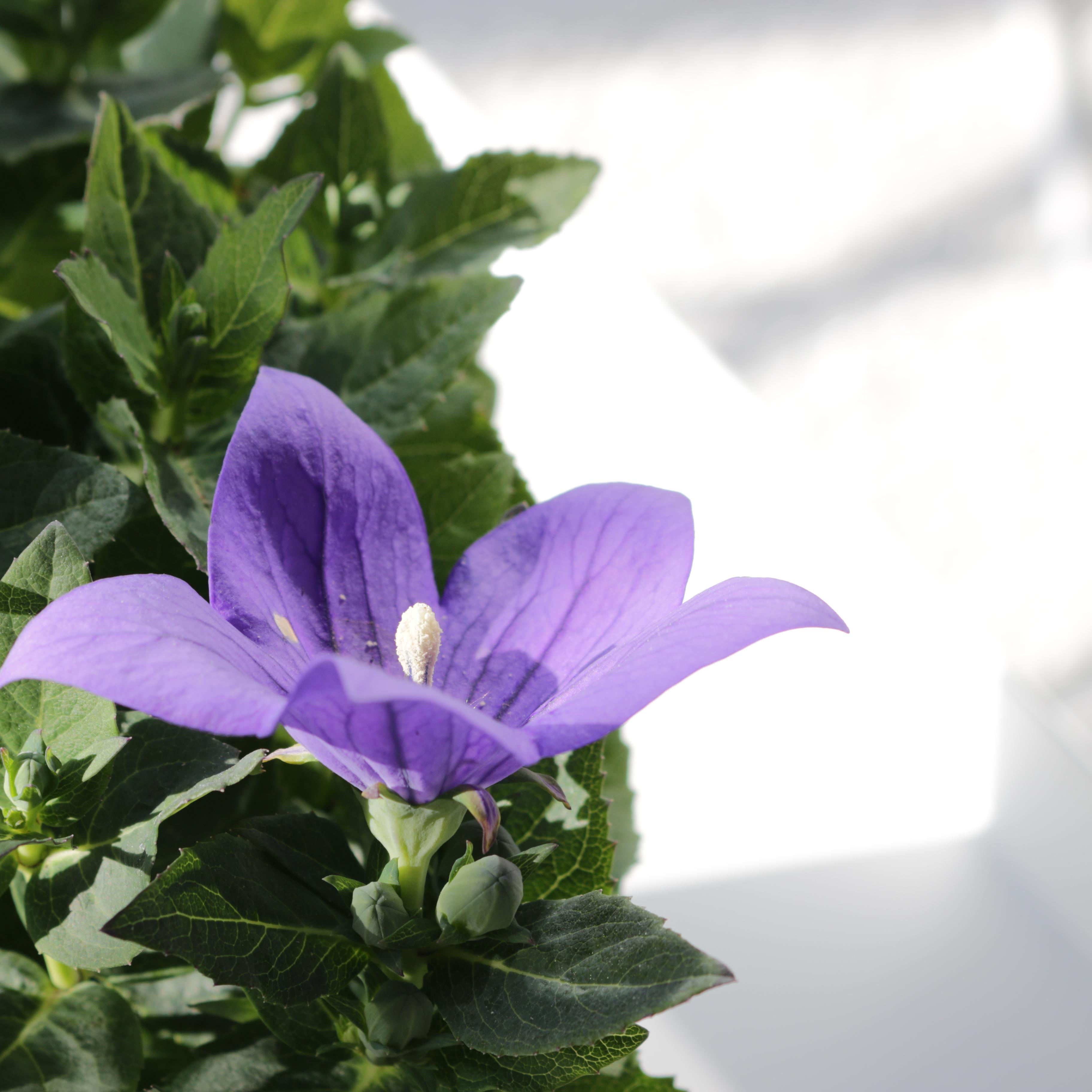 5 värin somehaaste sisustusväri violetti omakotivalkoinen sisustusinspiraatio