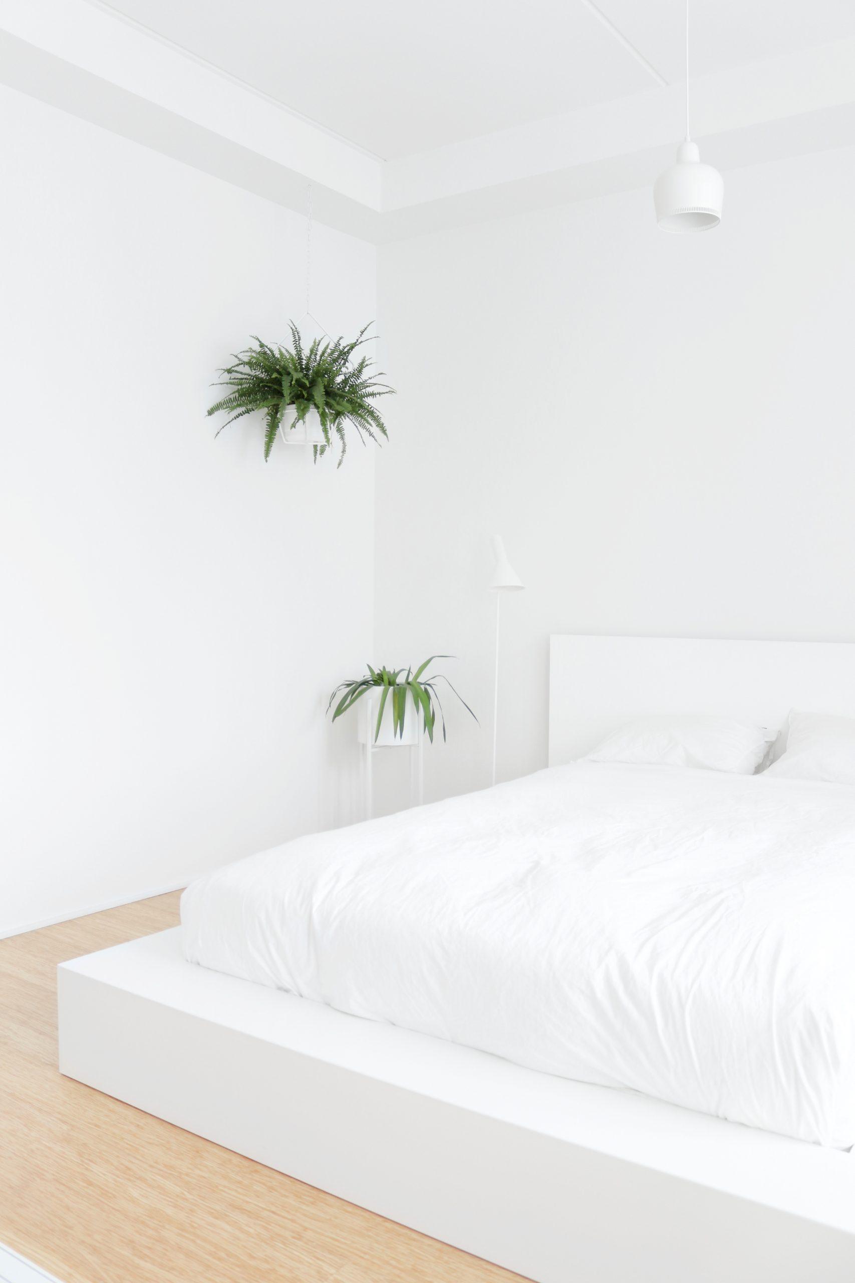 Viherkasvi amppelissa teräksinen ja moderni amppeli makuuhuoneen sisustus Omakotivalkoinen