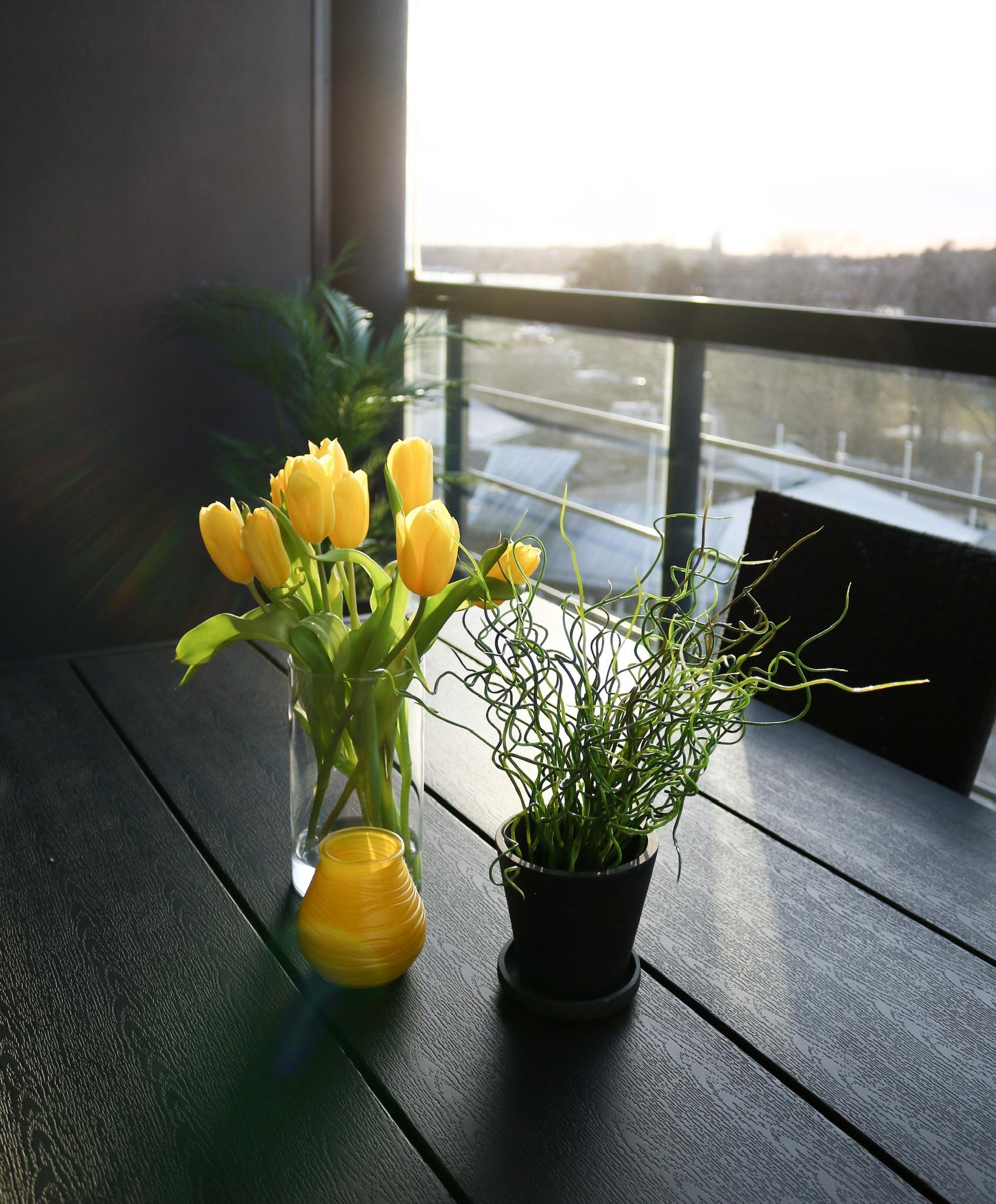 Auringonlasku ja keltaiset tulppaanit parvekkeella Omakotivalkoinen